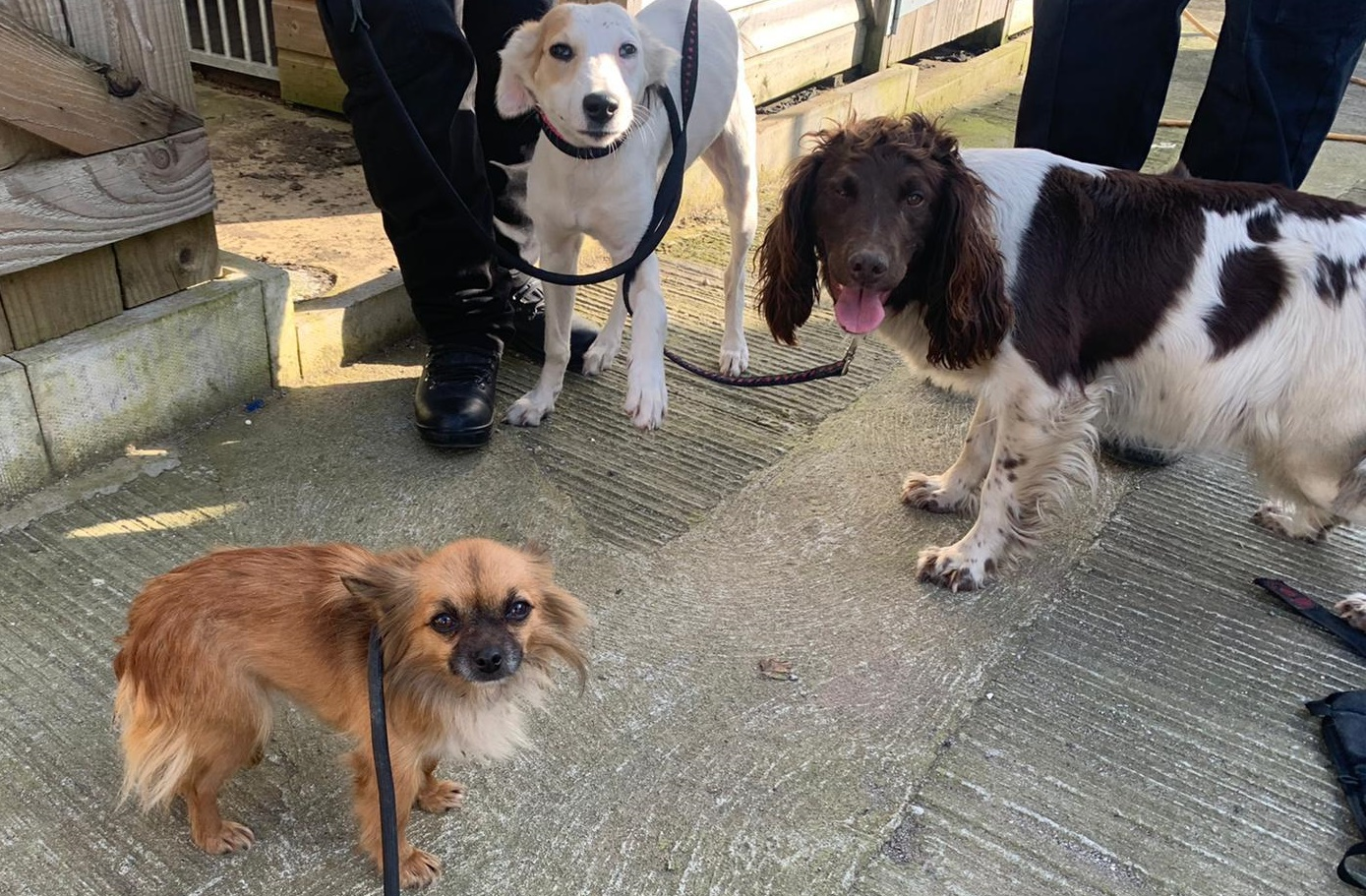 Three dogs being checked over after being seized